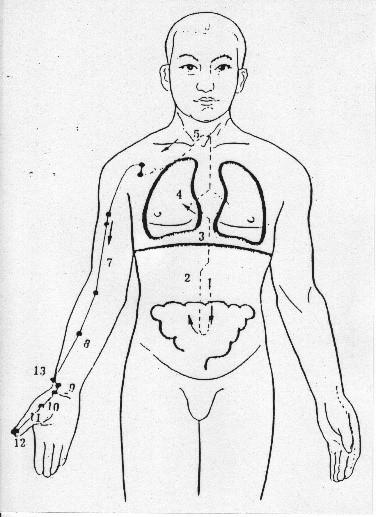 shiatsu meridiano del polmone