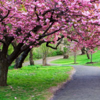 La primavera: il risveglio della forza vitale che fiorisce ad ogni stagione ed ogni età