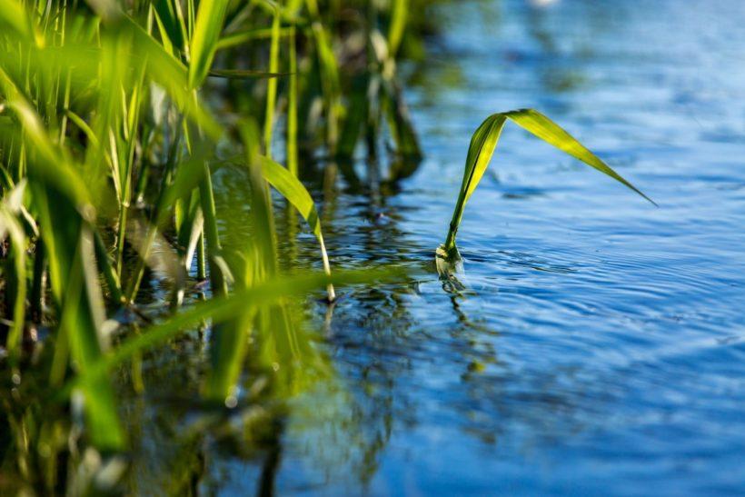 L'elemento Acqua: Reni e Vescica Urinaria